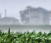 SEGÚN LA BOLSA DE CEREALES: La proyección de siembre de trigo cae a 6,7 MHa 3