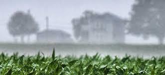 SEGÚN LA BOLSA DE CEREALES: La proyección de siembre de trigo cae a 6,7 MHa 8