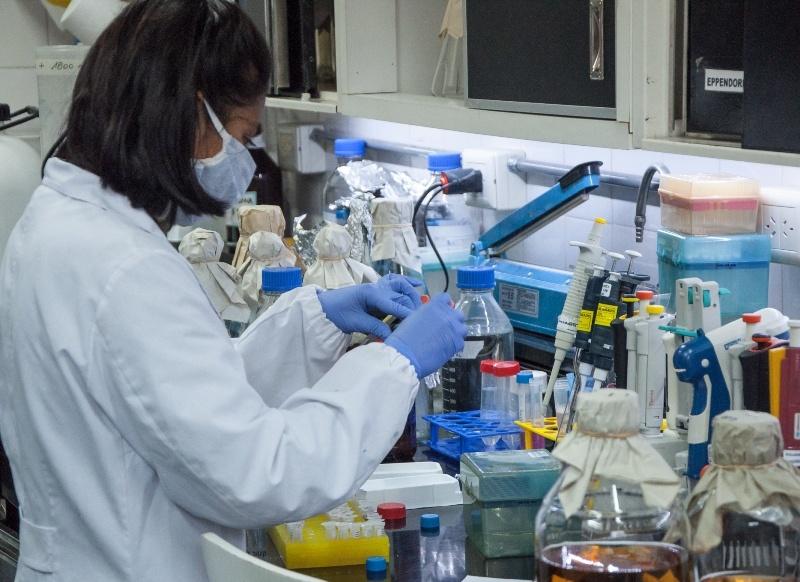 Construyen una biblioteca de nanoanticuerpos de llamas contra la COVID-19 3