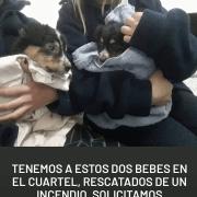 Bomberos rescataron a 2 cachorritos de un incendio y ahora buscan hogar 2