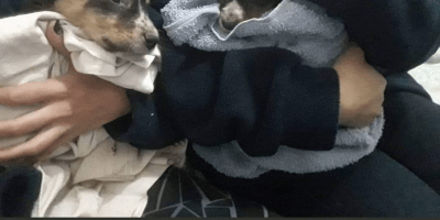 Bomberos rescataron a 2 cachorritos de un incendio y ahora buscan hogar 7
