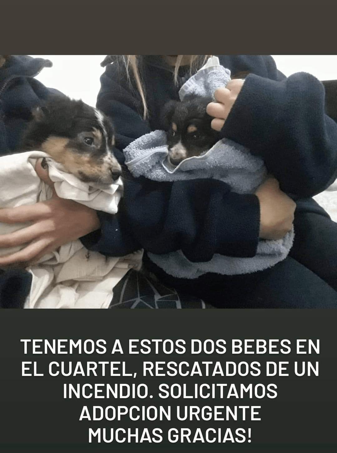 Bomberos rescataron a 2 cachorritos de un incendio y ahora buscan hogar 1