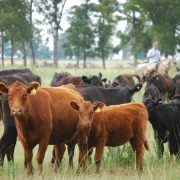 Garrapata bovina: detectan resistencia a la ivermectina 3