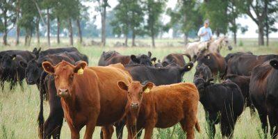 Garrapata bovina: detectan resistencia a la ivermectina 7