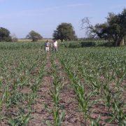Las lluvias, una clave en los rendimientos de los cultivos 5