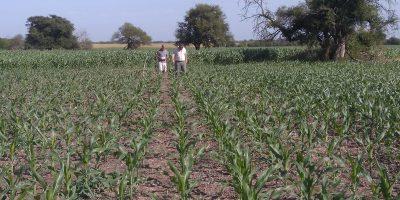 Las lluvias, una clave en los rendimientos de los cultivos 14