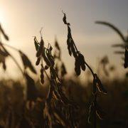 Agro: Récord de divisas por exportaciones en Marzo 14