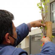 Se plantarán 100 árboles en veredas 7