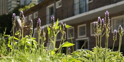 Entornos urbanos y naturaleza: mejoran la calidad de vida 7