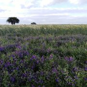 La microbiología del suelo revoluciona la producción agropecuaria 5