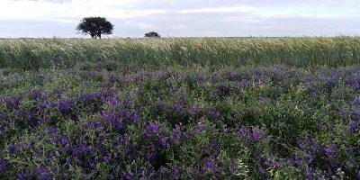 La microbiología del suelo revoluciona la producción agropecuaria 6