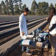 Implementan un sistema de monitoreo de plagas en cultivos hortícolas 13