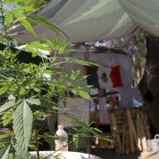 El Senado de México aprueba un proyecto de ley de legalización del cannabis 3