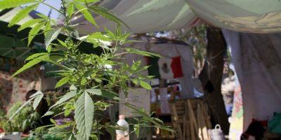 El Senado de México aprueba un proyecto de ley de legalización del cannabis 7
