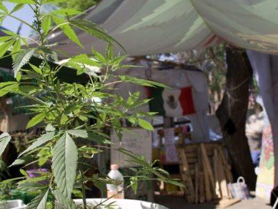 El Senado de México aprueba un proyecto de ley de legalización del cannabis 2