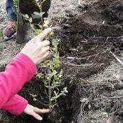 INTA: Restauran suelos y ambientes afectados por los incendios 4
