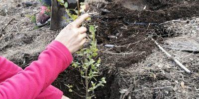 INTA: Restauran suelos y ambientes afectados por los incendios 9