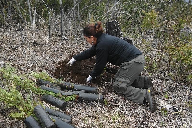 INTA: Restauran suelos y ambientes afectados por los incendios 1