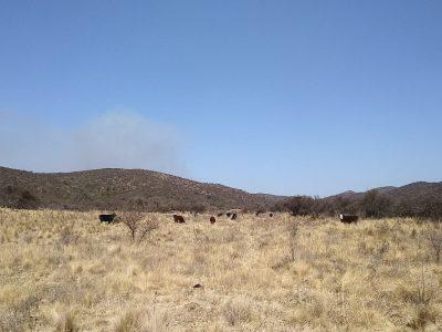 INTA: Pautas de manejo de ganado en zonas afectadas por los incendios 4