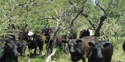 INTA: Cómo promover el almacenaje de carbono en sistemas ganaderos 6