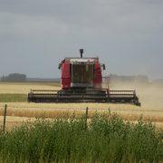 Instalan primera planta del país de rastrojo de trigo para fabricar paneles de construcción 2