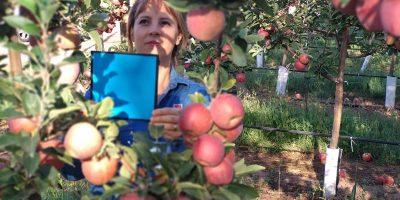 Evalúan el uso de imágenes digitales para calcular rindes frutícolas 9