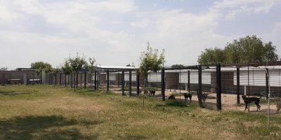 Forestación en Caniles Municipales 5