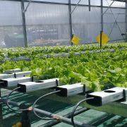 Cultivo en sustrato e hidroponía: una tecnología en auge 13