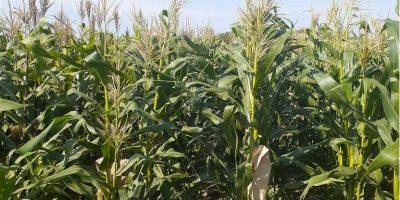 """CEEA: """"Ratificamos el cese de comercialización de granos"""" 8"""