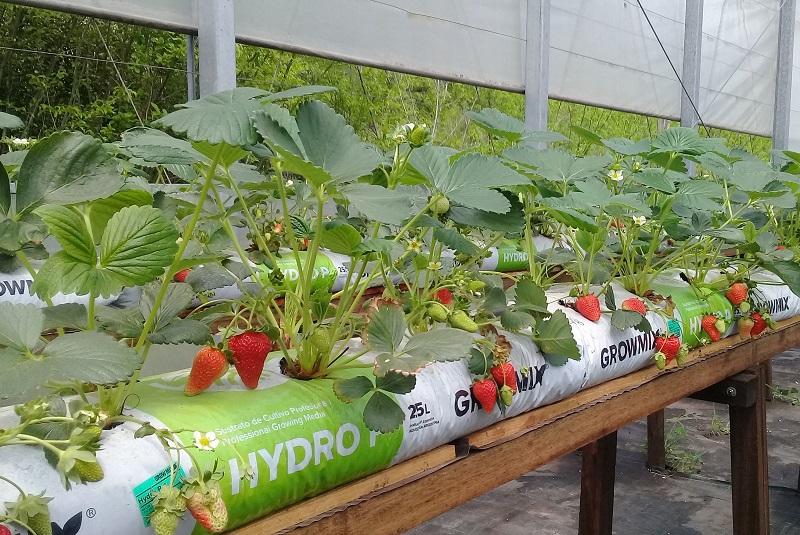Cultivo en sustrato e hidroponía: una tecnología en auge 1