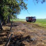 Bomberos combatió las llamas de un campo cerca de Pinzón 3