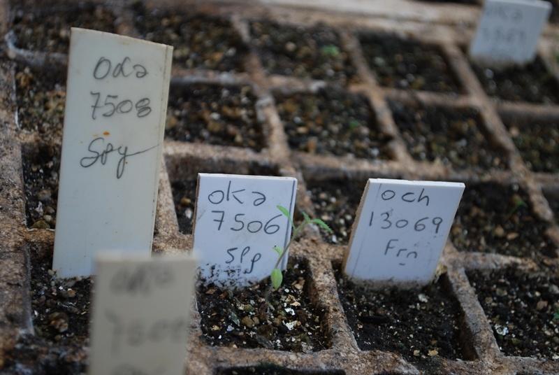 El INTA trabaja en la conservación de cultivos ancestrales 1