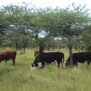 Actualización del Plan Nacional de Control y Erradicación de Brucelosis bovina 3