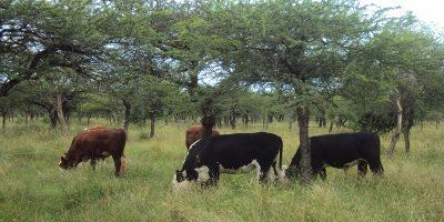 Actualización del Plan Nacional de Control y Erradicación de Brucelosis bovina 12