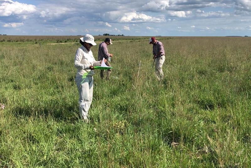 Pastizales del futuro: ganadería con servicios ambientales 2