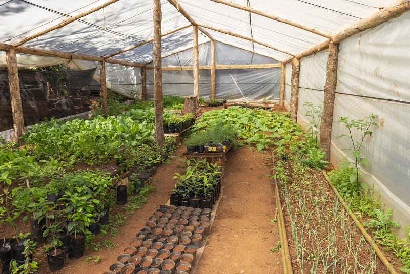 El INTA impulsa invernaderos escuelas para promover la soberanía alimentaria 1