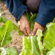 El INTA impulsa invernaderos escuelas para promover la soberanía alimentaria 4