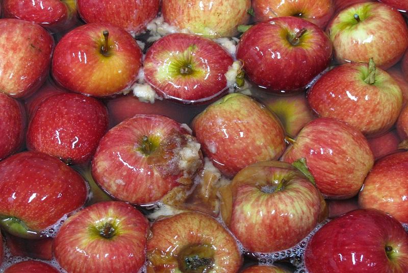 Pautas de higiene en empaque para reducir pérdidas de frutas en poscosecha 1