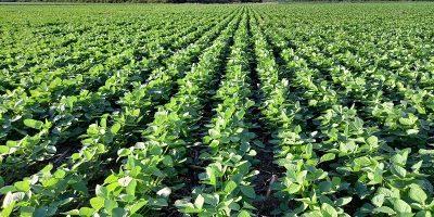 En Chaco, la brecha productiva en soja es del 42 % 10