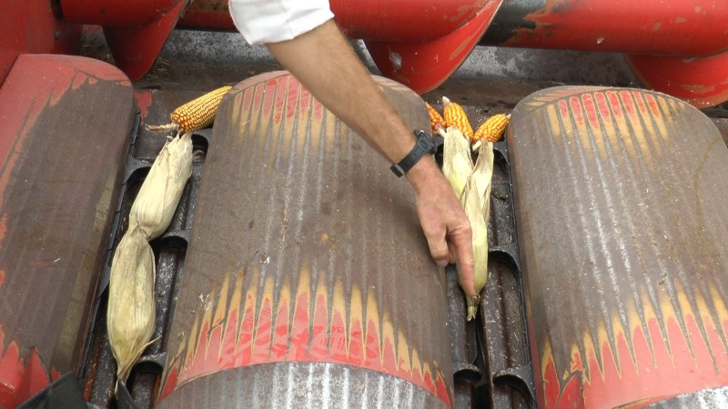 Cosecha de maíz: con el foco puesto en el cabezal 1