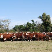 Óxido nitroso: cuanto aporta la ganadería en períodos invernales 13