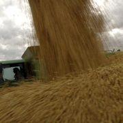La Bolsa de Cereales de Buenos Aires recorta la estimación de cosecha de soja a 43 millones de toneladas 4