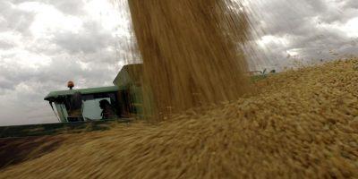 La Bolsa de Cereales de Buenos Aires recorta la estimación de cosecha de soja a 43 millones de toneladas 7