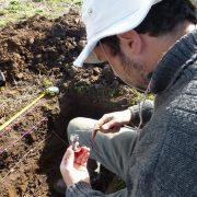 Con residuos avícolas mejoran la fertilidad y estructura del suelo 4