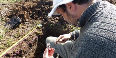 Con residuos avícolas mejoran la fertilidad y estructura del suelo 11