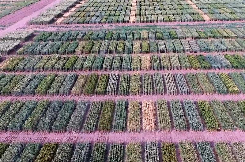 La cebada argentina se posiciona en el mercado mundial 1