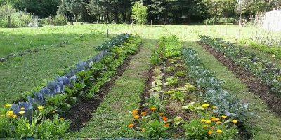 Huerta: siete consejos para producir en otoño-invierno 10