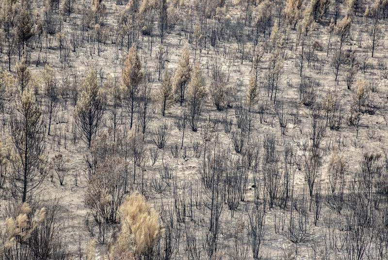 El Bolsón: ¿Qué hacer luego de los incendios? 1