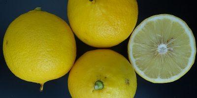 Impulsan la sanidad controlada en la producción de bergamota 12