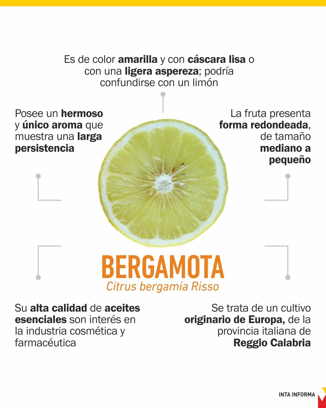 Impulsan la sanidad controlada en la producción de bergamota 1